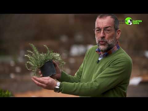 Ein Kräuterhochbeet anlegen - Gartentipps von Volker Kugel - www.grünzeug.tv